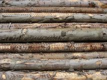 Stacked log long cut trees Stock Photos