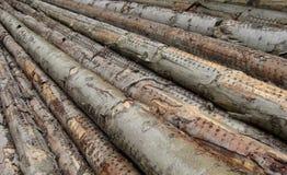 Stacked log long cut trees Royalty Free Stock Photos