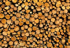 Stacked Logs Stock Image