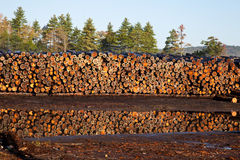 Stacked Logs Royalty Free Stock Images