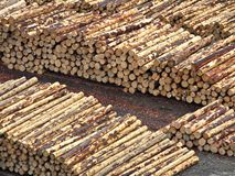 Free Stacked Logs Royalty Free Stock Photography - 2292617