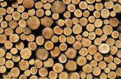 Stacked logs. A pile of sawn logs Stock Photo