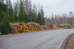 Stacked Logs Royalty Free Stock Photos
