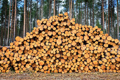 Stacked Logs Royalty Free Stock Photo