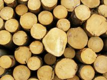 Stacked logs. A pile of fresh-sawn pine logs Royalty Free Stock Photos