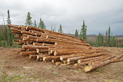Stacked Logs Stock Photos