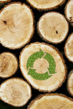 Stacked Logs Background with green plant recycle Stock Photography