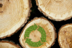 Stacked Logs Background with green plant recycle. Stacked Logs with green plant recycle symbol, natural wood background Stock Photo