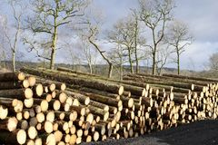 Stacked logs chopped wood for renewable energy biomass boiler. Uk royalty free stock photo