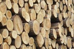 Stacked Logs Stock Photography
