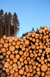 Stacked logs in the forest Stock Photos