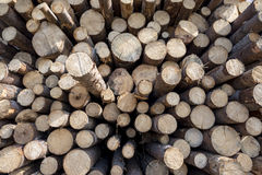 Stacked logs. Freshly cut logs, ready for processing Stock Photo