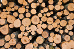 Stacked logs. Newly felled timber  stack of wood Stock Image
