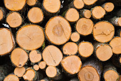 Stacked logs. Newly felled timber  stack of wood Stock Photography