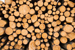 Stacked logs. Newly felled timber  stack of wood Royalty Free Stock Photo
