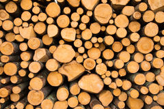 Stacked logs. Newly felled timber  stack of wood Royalty Free Stock Image
