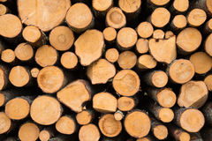 Stacked logs. Newly felled timber  stack of wood Stock Images