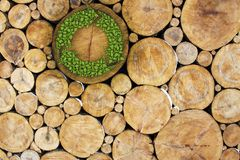 Stacked Logs with recycle symbol Royalty Free Stock Photography