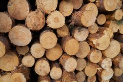 Stacked logs. royalty free stock photos