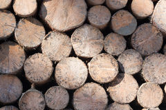Stacked logs of round wood. Stack of round wooden logs Stock Images