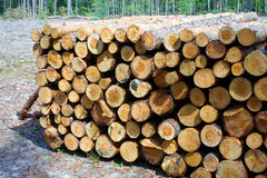 Stacked Logs Texture Royalty Free Stock Images