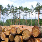 Stacked Logs Texture Stock Photo