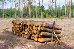 Stacked Logs Texture Stock Photos