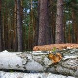 Stacked Logs Texture Royalty Free Stock Photography