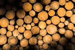 Stacked logs of wood Stock Photography