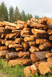 Stacked Lumber Logs Royalty Free Stock Photo