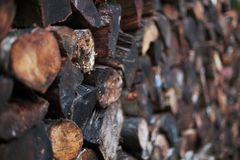 Stacked mixed cord of wet firewood. Shallow depth of field view of a neatly stacked mixed cord of wet and dirty firewood stock images