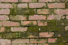Stacked Mossy Brick. Stacked Red Mossy Brick Texture royalty free stock photo