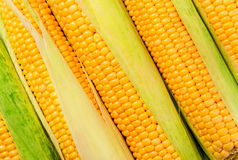 Stacked near peeled corn cobs diagonally Stock Photo
