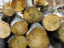 Stacked old wood tree logs Royalty Free Stock Image