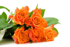 Stacked orange roses Stock Image