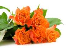 Stacked orange roses Stock Image
