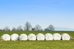 Stacked and packed hay bales, in a cultivated field. Poland, Stacked and packed hay bales europe strzegom evenly field grass green meadow sky tree wrapped stock photography