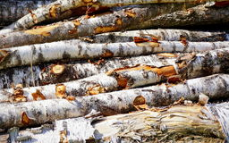 Stacked pile of wood Royalty Free Stock Photos