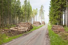 Stacked piles of timber Stock Image