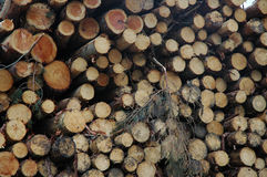 Stacked pine logs Royalty Free Stock Photography