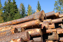 Stacked Pine Logs with Blue Sky Royalty Free Stock Photo