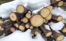 Stacked Pine Logs Stock Photos