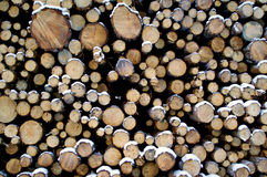 Stacked Pine Logs in Snow. Cut and stacked pine logs in winter snow. Pine is used for wood pulp and timber and making of furniture and paneling and other high Stock Photo