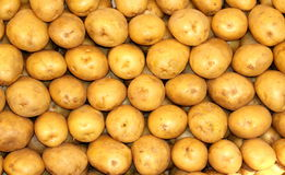Stacked Potatoes Royalty Free Stock Images