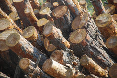 Stacked round logs. Round raw logs stacked in a pile Royalty Free Stock Photo