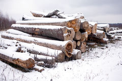 Stacked sawed pine logs in a pile under snow in overcast winter day Stock Images