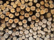 Stacked sort pine timber. Pile of wood for construction royalty free stock photos