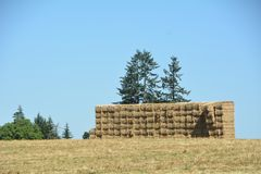 Stacked Square Hay Bales w/ blue sky & trees. This is a stack of hay bales in a field with green trees under a blue sky between Salem and Lafayette, Oregon in Royalty Free Stock Photography