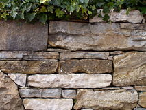 Stacked stone wall covered with ivy Royalty Free Stock Photography