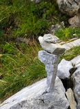 Stacked stones balancing in the mountains stock images